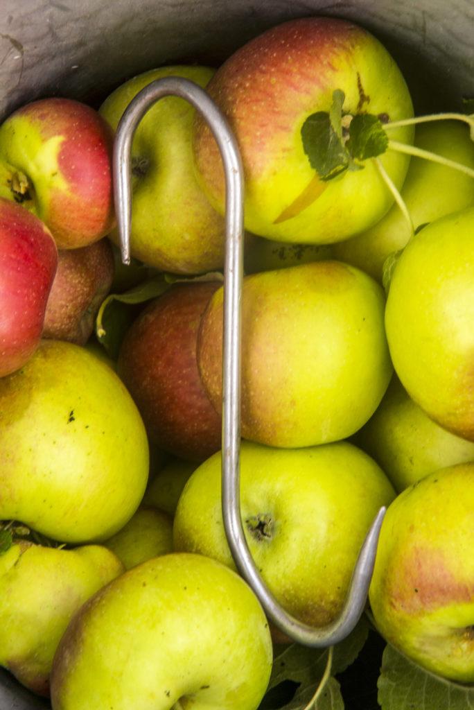 Pommes provenant d'un verger à hautes tiges.