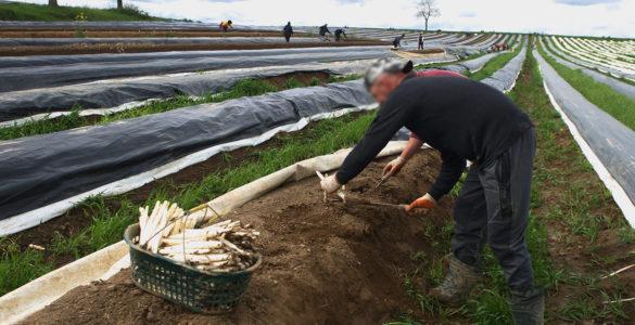Travailleurs saisonniers agricoles
