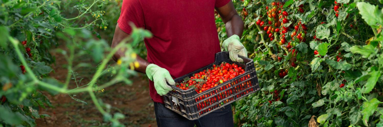 Sans papier, travailleurs saisonniers agricoles