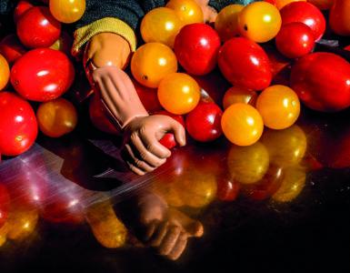 Den Berk Délice tomates
